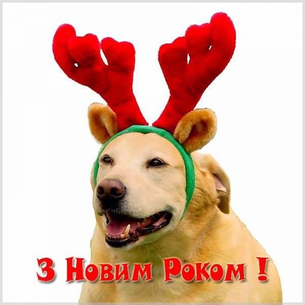 Поздравление с Новым Годом на украинском языке в открытке с юмором - скачать бесплатно на otkrytkivsem.ru