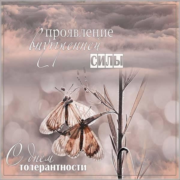 Поздравительная картинка с днем терпимости - скачать бесплатно на otkrytkivsem.ru