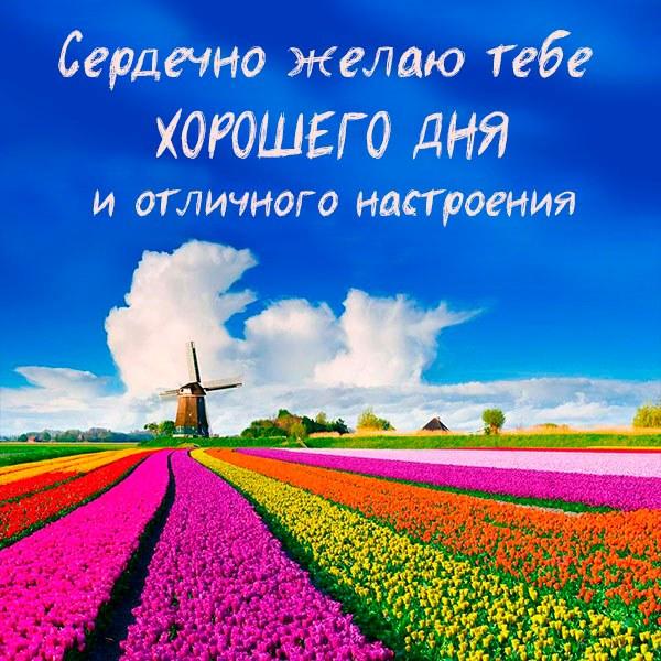 Пожелание хорошего дня и отличного настроения в картинке - скачать бесплатно на otkrytkivsem.ru