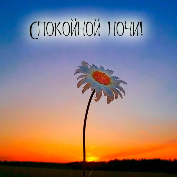 Пожелание спокойной ночи девочке в картинке - скачать бесплатно на otkrytkivsem.ru