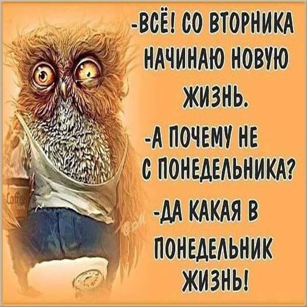 Прикольная бесплатная картинка про вторник - скачать бесплатно на otkrytkivsem.ru