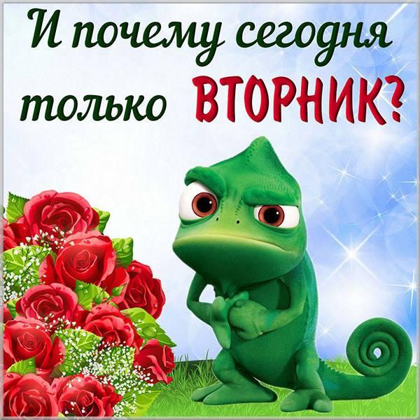 Прикольная и смешная картинка про вторник - скачать бесплатно на otkrytkivsem.ru
