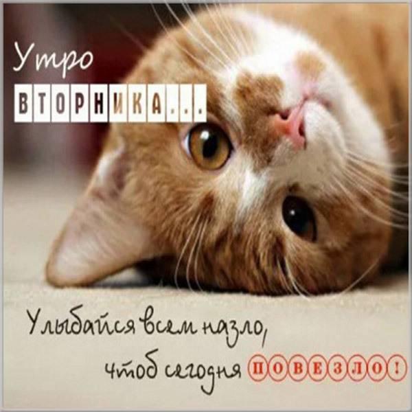 Прикольная и смешная картинка со вторником - скачать бесплатно на otkrytkivsem.ru