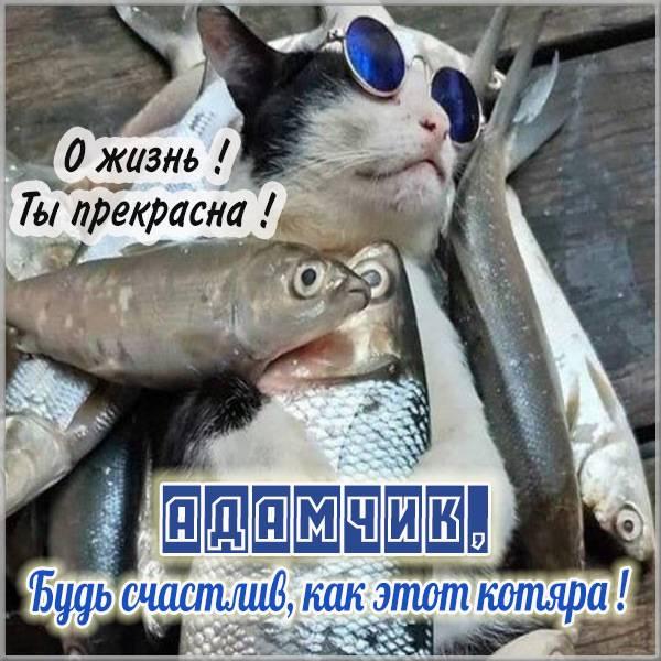 Прикольная картинка для Адама - скачать бесплатно на otkrytkivsem.ru