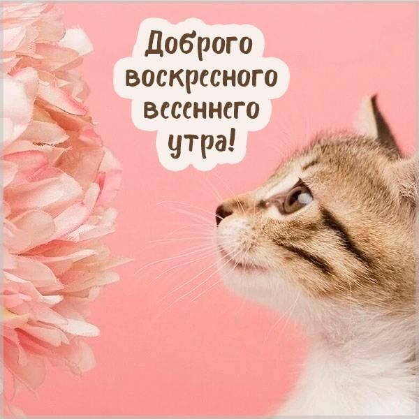 Прикольная картинка доброго воскресного весеннего утра - скачать бесплатно на otkrytkivsem.ru