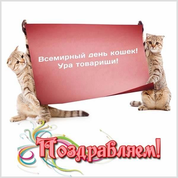 Прикольная картинка на день кошек - скачать бесплатно на otkrytkivsem.ru