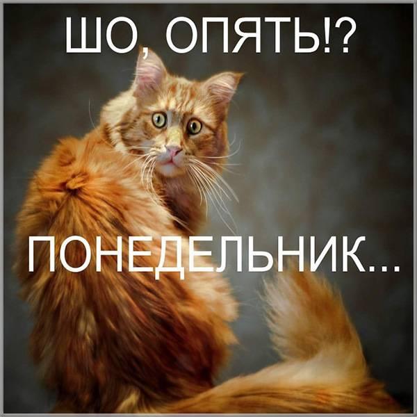 Прикольная картинка ну вот опять понедельник - скачать бесплатно на otkrytkivsem.ru