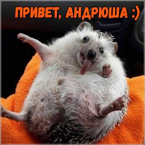 Прикольная картинка привет Андрюша - скачать бесплатно на otkrytkivsem.ru