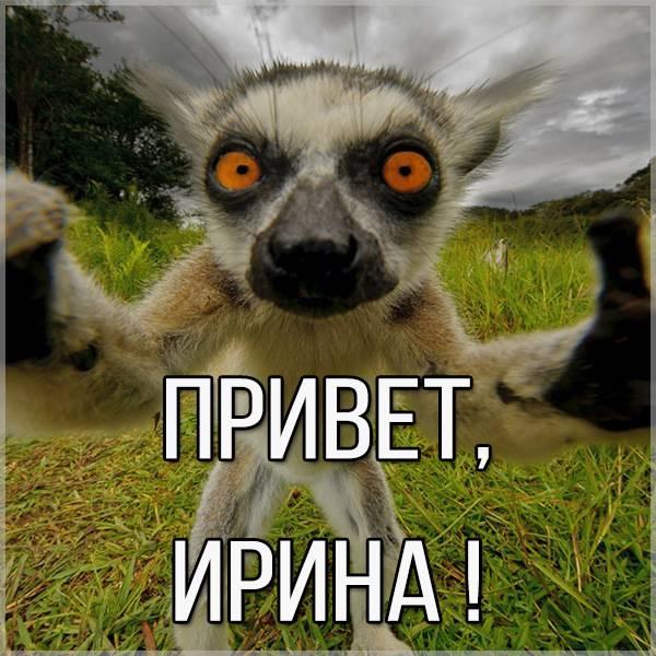 Прикольная картинка привет Ирина - скачать бесплатно на otkrytkivsem.ru