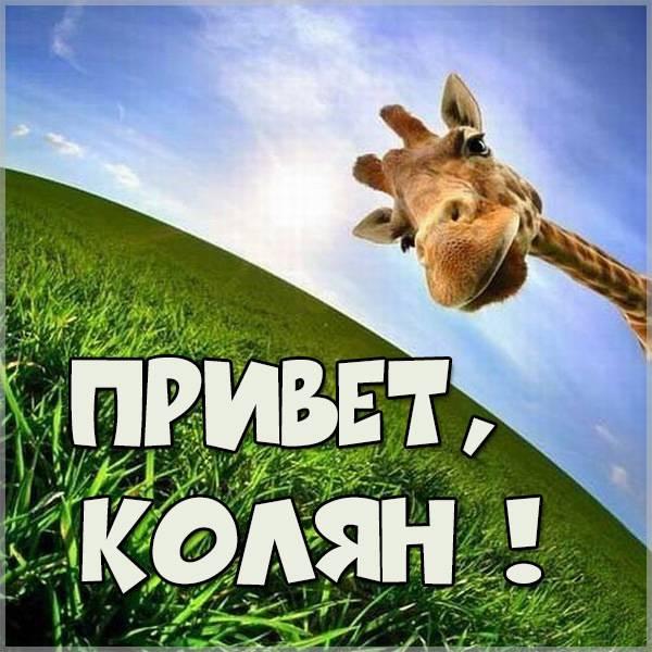 Прикольная картинка привет Колян - скачать бесплатно на otkrytkivsem.ru