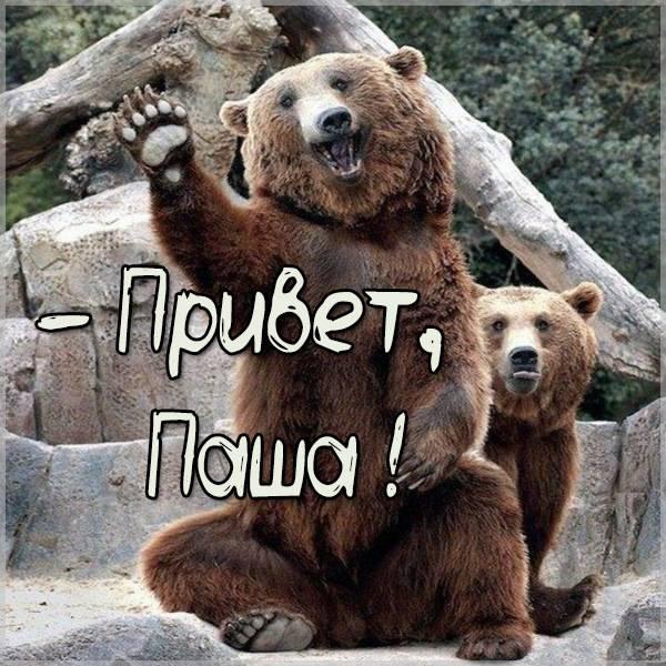 Прикольная картинка привет Паша - скачать бесплатно на otkrytkivsem.ru