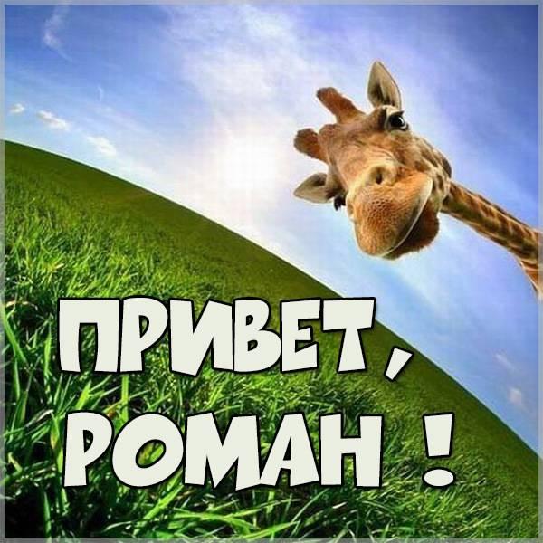 Прикольная картинка привет Роман - скачать бесплатно на otkrytkivsem.ru
