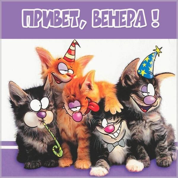 Прикольная картинка привет Венера - скачать бесплатно на otkrytkivsem.ru