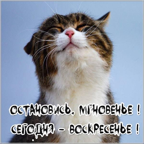 Прикольная картинка про воскресенье друзьям - скачать бесплатно на otkrytkivsem.ru
