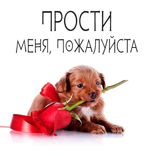 Прикольная картинка прости меня пожалуйста - скачать бесплатно на otkrytkivsem.ru
