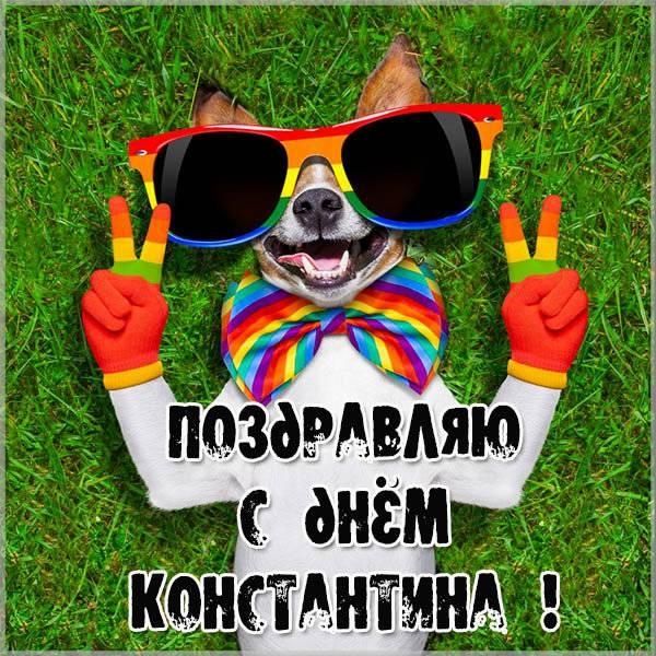 Прикольная картинка с днем Константина - скачать бесплатно на otkrytkivsem.ru