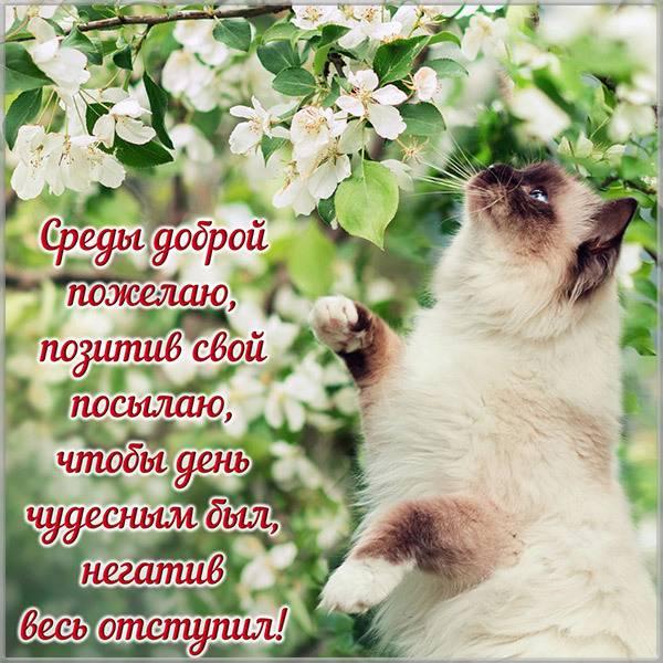 Прикольная картинка с надписью доброй среды - скачать бесплатно на otkrytkivsem.ru