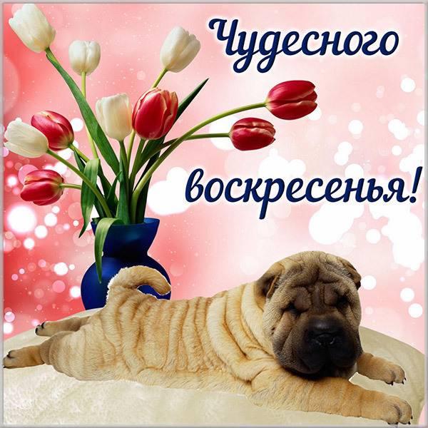 Прикольная картинка с пожеланием чудесного воскресенья - скачать бесплатно на otkrytkivsem.ru