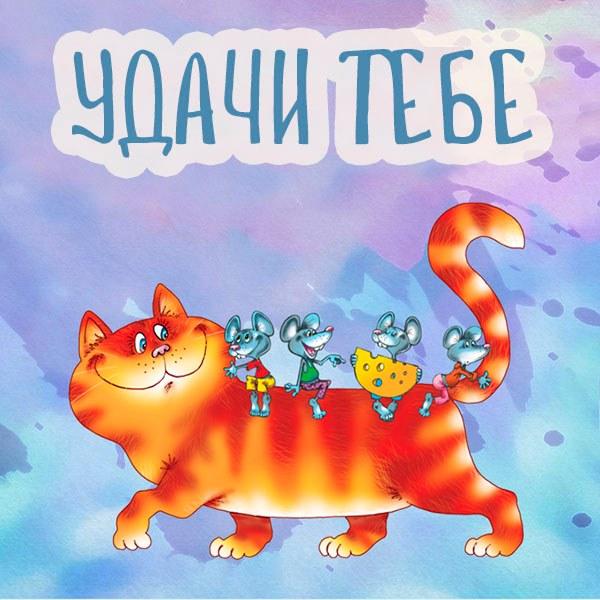 Прикольная картинка удачи тебе - скачать бесплатно на otkrytkivsem.ru