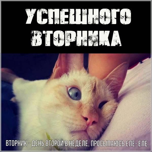 Прикольная картинка успешного вторника - скачать бесплатно на otkrytkivsem.ru