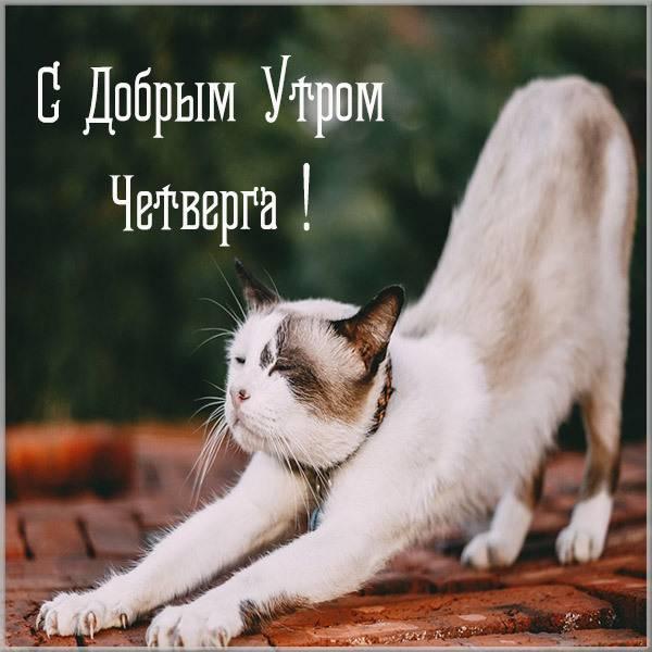 Прикольная картинка утро четверга - скачать бесплатно на otkrytkivsem.ru