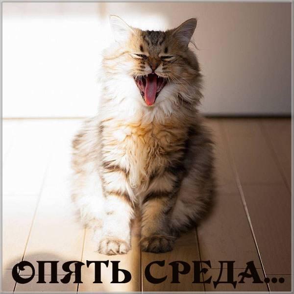 Прикольная картинка утро среды - скачать бесплатно на otkrytkivsem.ru