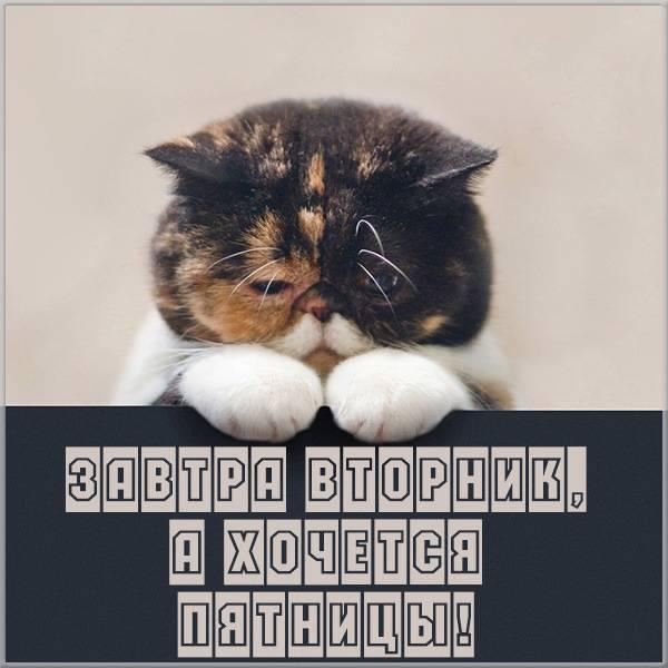Прикольная картинка завтра вторник - скачать бесплатно на otkrytkivsem.ru