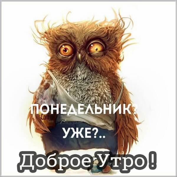 Прикольная открытка доброе утро понедельника в картинке - скачать бесплатно на otkrytkivsem.ru