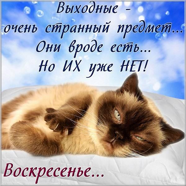 Прикольная воскресная открытка - скачать бесплатно на otkrytkivsem.ru