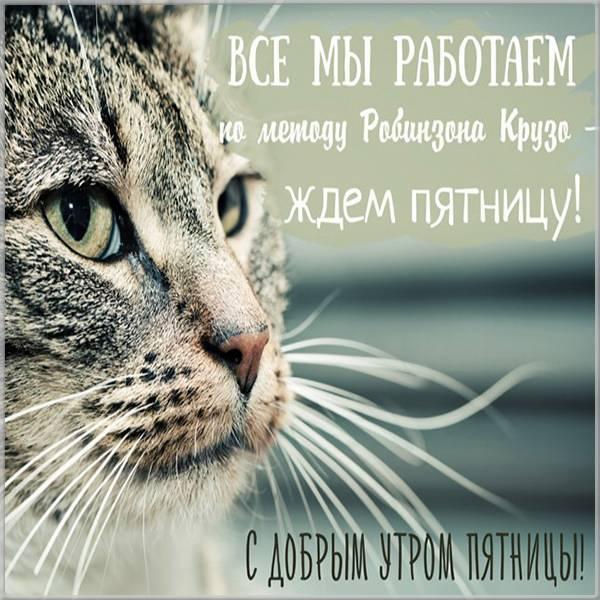Прикольное фото доброе утро пятница - скачать бесплатно на otkrytkivsem.ru