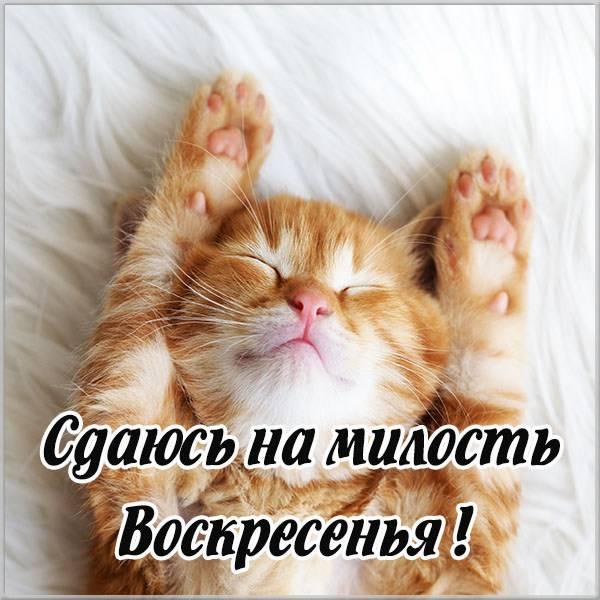 Прикольное фото про воскресенье выходной - скачать бесплатно на otkrytkivsem.ru