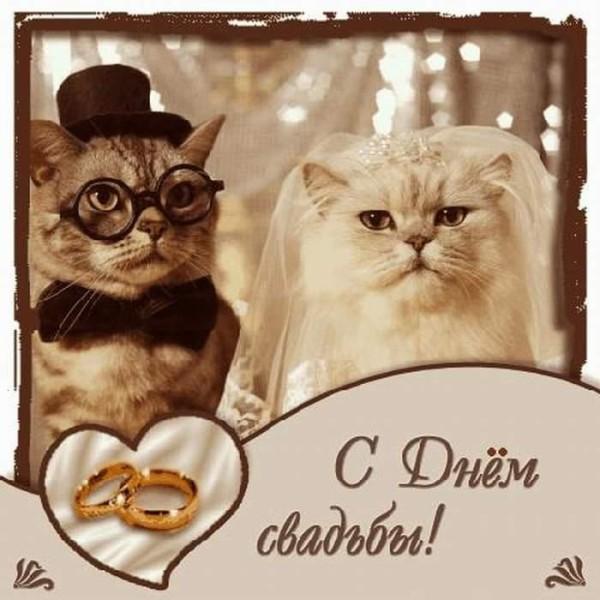 Прикольное фото с днем Свадьбы - скачать бесплатно на otkrytkivsem.ru
