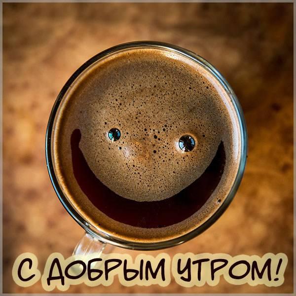 Прикольное фото с добрым утром девушке - скачать бесплатно на otkrytkivsem.ru