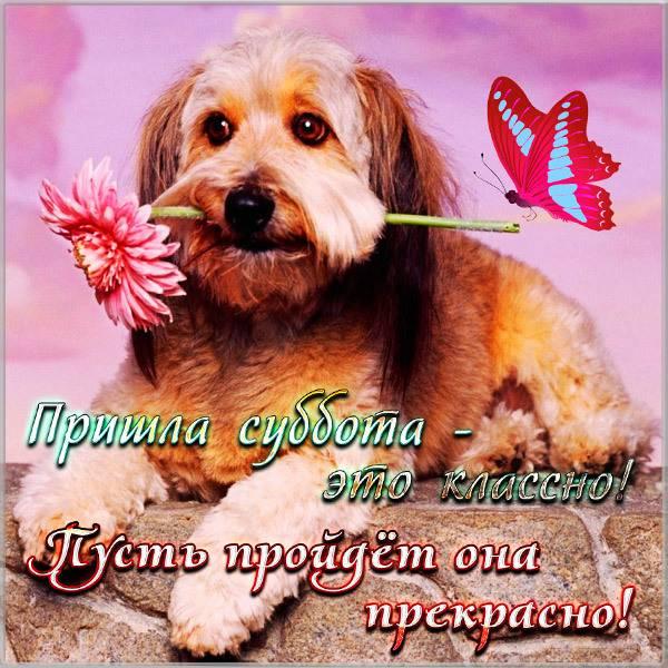 Прикольное поздравление с субботой в картинке - скачать бесплатно на otkrytkivsem.ru