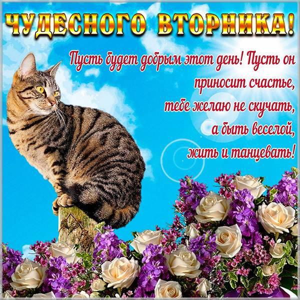 Прикольное пожелание хорошего вторника в картинке - скачать бесплатно на otkrytkivsem.ru