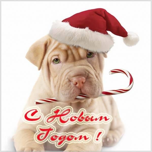 Смешная картинка на праздник Новый Год - скачать бесплатно на otkrytkivsem.ru