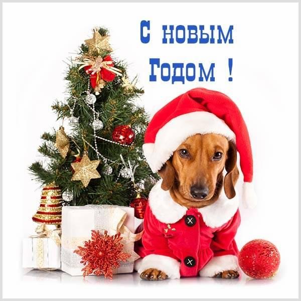 Прикольное фото с новым годом - скачать бесплатно на otkrytkivsem.ru