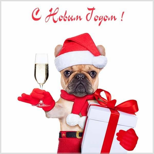 Смешная открытка про Новый год - скачать бесплатно на otkrytkivsem.ru