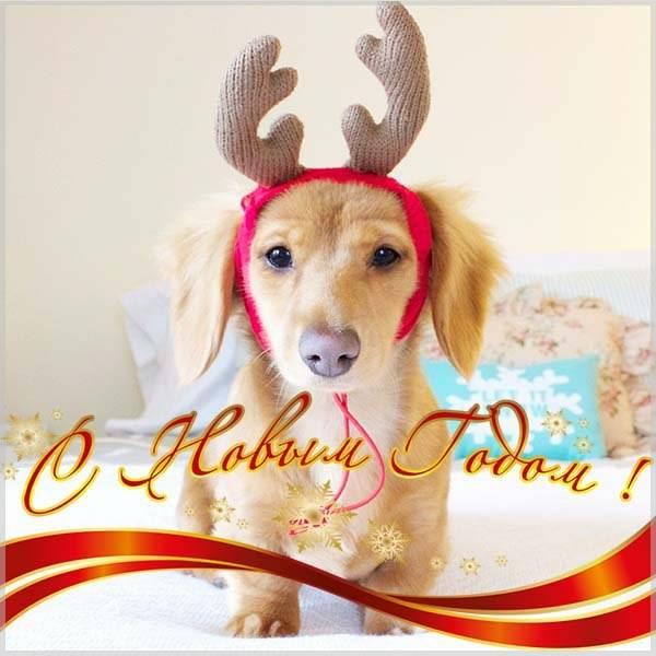 Смешное фото про Новый год - скачать бесплатно на otkrytkivsem.ru