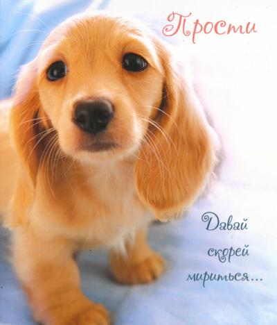 Прости картинка - скачать бесплатно на otkrytkivsem.ru