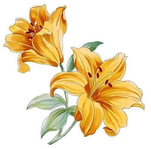 Рисованный цветок - скачать бесплатно на otkrytkivsem.ru