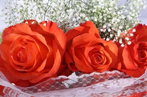 Самые самые Розы - скачать бесплатно на otkrytkivsem.ru