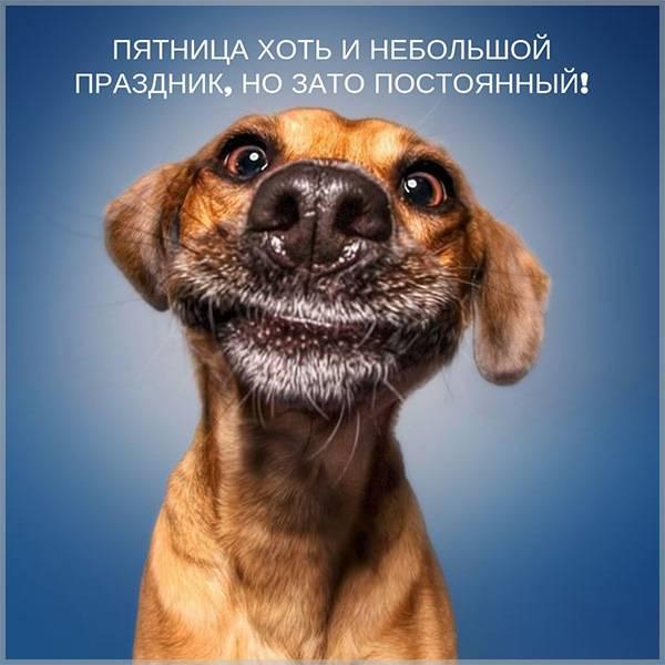Смешная картинка для поднятия настроения на пятницу - скачать бесплатно на otkrytkivsem.ru