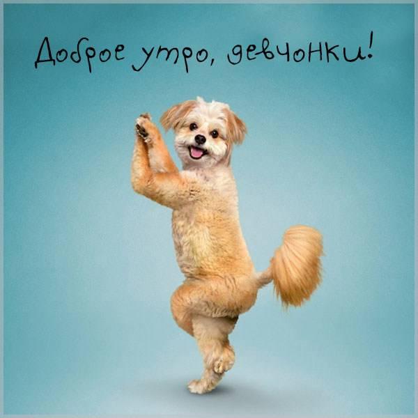 Смешная картинка доброе утро девчонки - скачать бесплатно на otkrytkivsem.ru