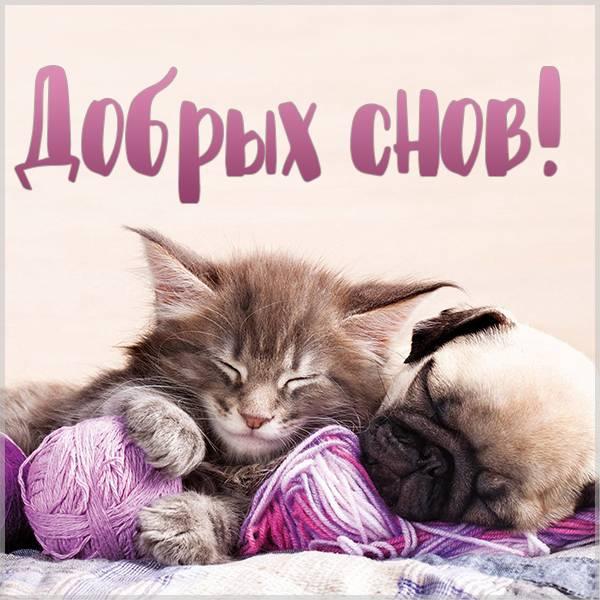 Смешная картинка добрых снов - скачать бесплатно на otkrytkivsem.ru