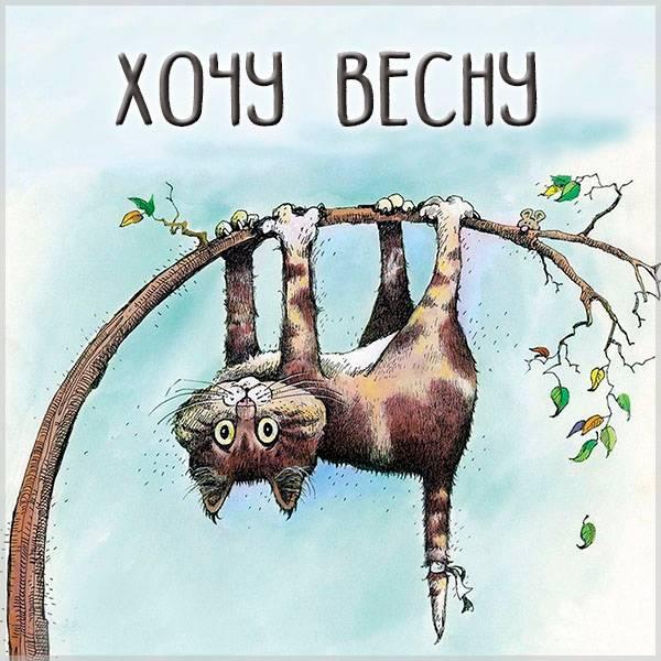 Смешная картинка хочу весну - скачать бесплатно на otkrytkivsem.ru