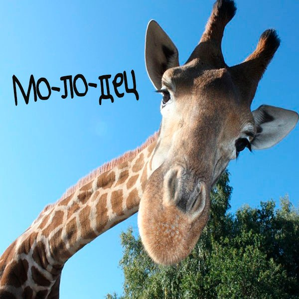 Смешная картинка молодец - скачать бесплатно на otkrytkivsem.ru