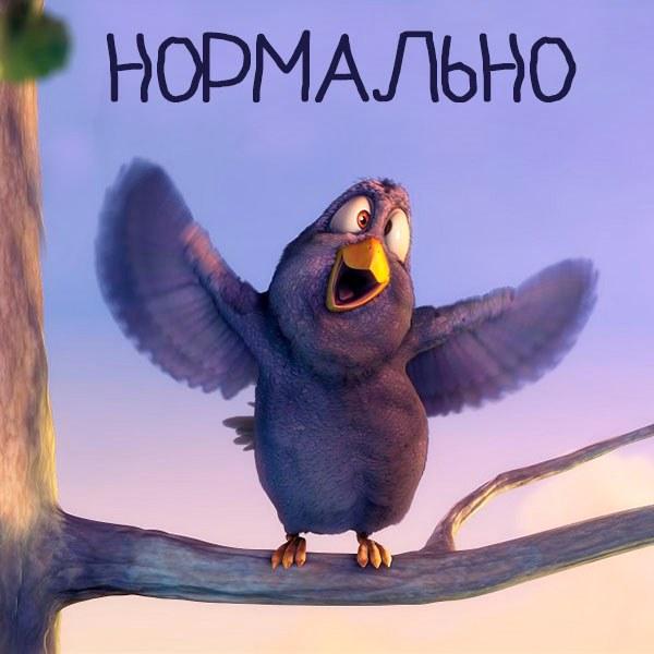 Смешная картинка нормально - скачать бесплатно на otkrytkivsem.ru
