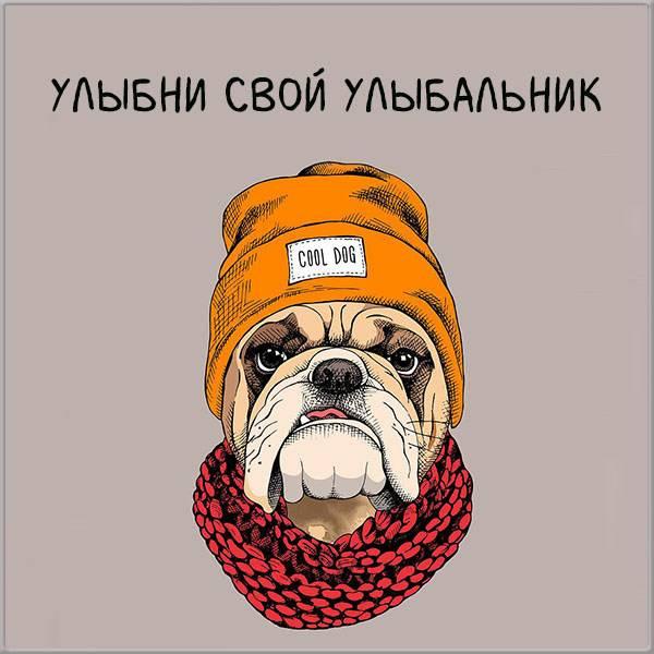 Смешная картинка парню - скачать бесплатно на otkrytkivsem.ru