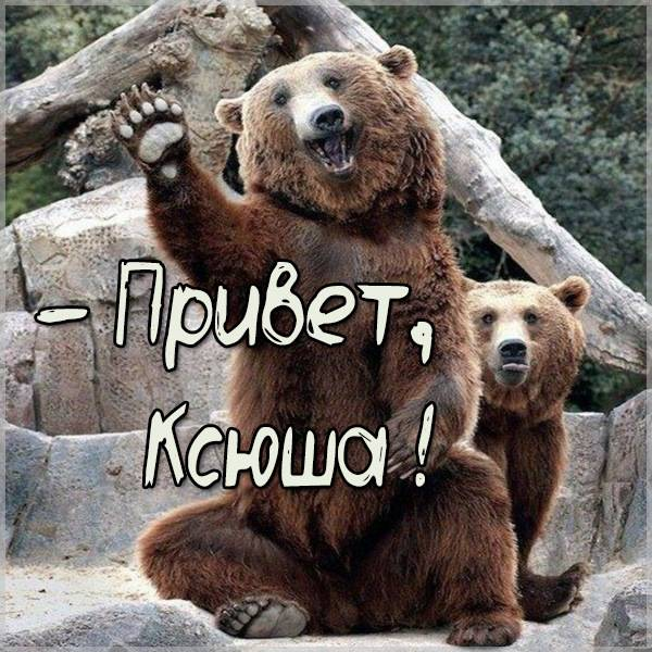 Смешная картинка привет Ксюша - скачать бесплатно на otkrytkivsem.ru